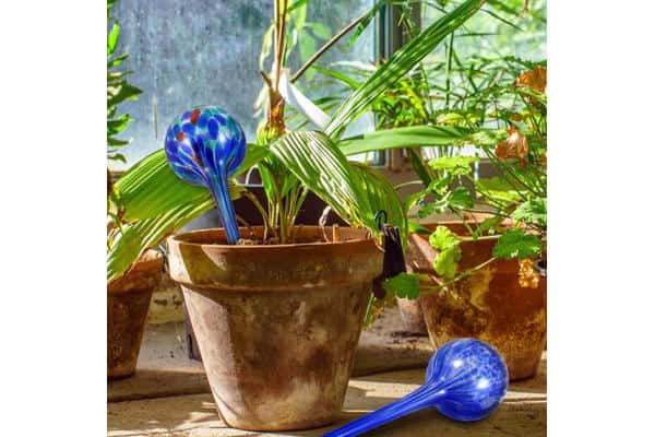 How to use watering globes for plants