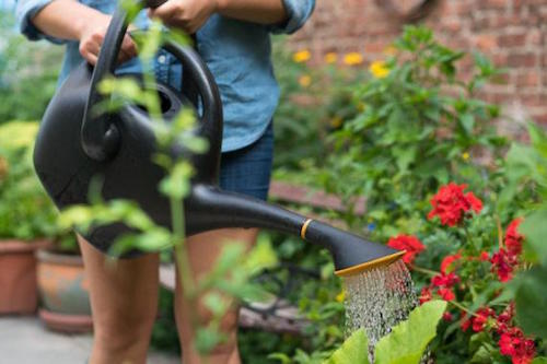 Some Watering Do's and Don'ts